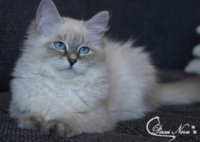 Niebieskooka księżniczka Beatrix