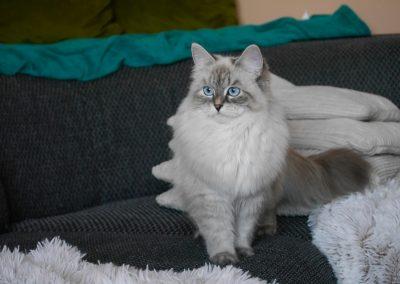 Beatrix Lunnaya Dymka