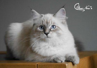 Catia Persei
