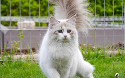 Jak Zrobić Kotu Dobre Zdjęcie?